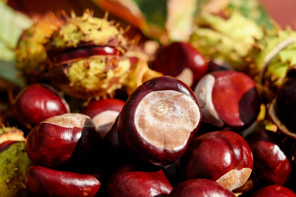 Con las hojas del árbol se pueden hacer infusiones que serán muy eficaces contra la tos convulsiva o tosferina.